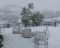 nieve cara sur almendro