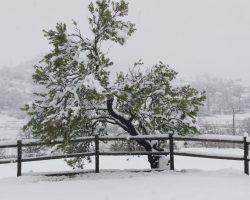 Nieve almendro